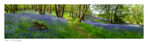 Garth images, Powys, Bluebell Common, Builth Wells
