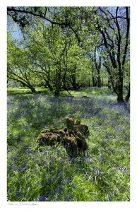 Garth images, Powys, Bluebell Common, Builth Wells images